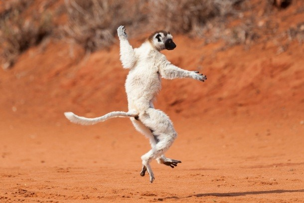 7 Day Madagascar Adventure 2 - African Adventure Specialists