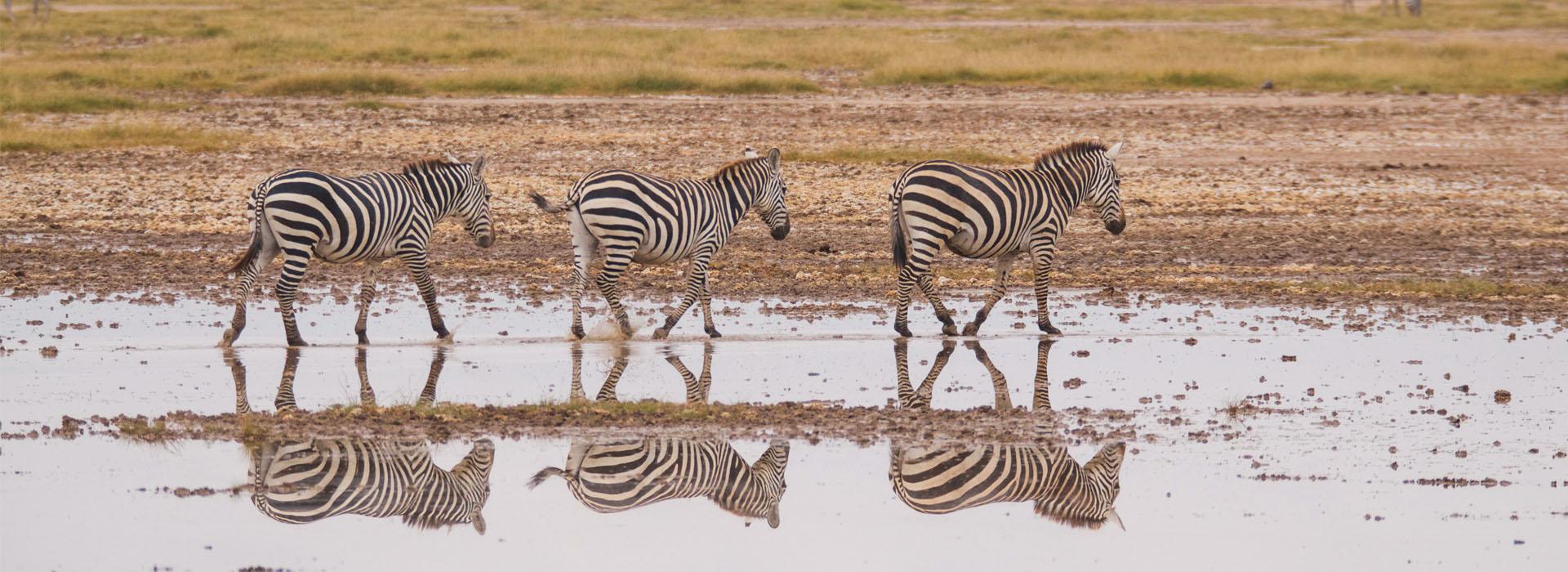 The Aberdares Top Destinations in Kenya - African Adventure Specialists