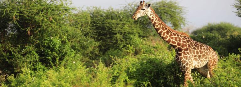 Amboseli Park Top Destinations in Kenya - African Adventure Specialists
