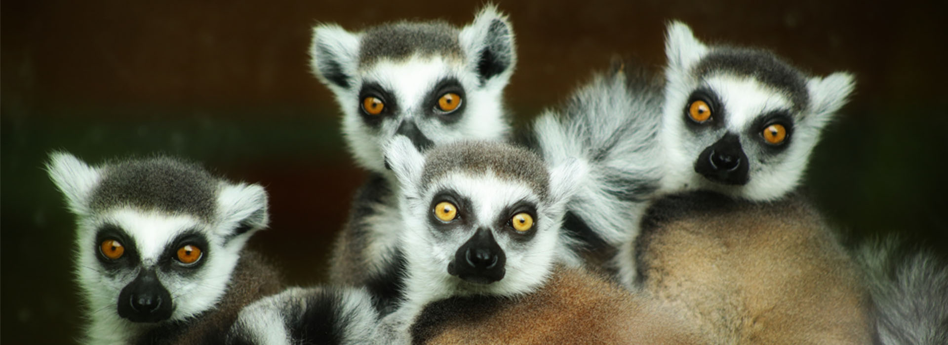 Madagascar 14 Day Adventure - African Adventure Specialists