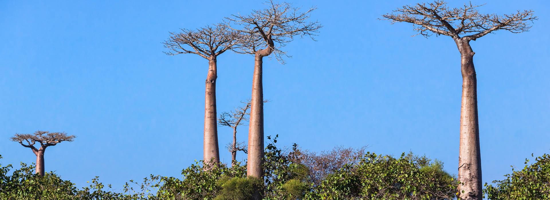 Madagascar Top Destinations - African Adventure Specialists 2