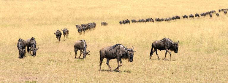 Top Destinations in Kenya - African Adventure Specialists