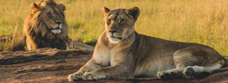 12 DAYS UGANDA TO RWANDA TOUR - AFrican Adventure Specialists