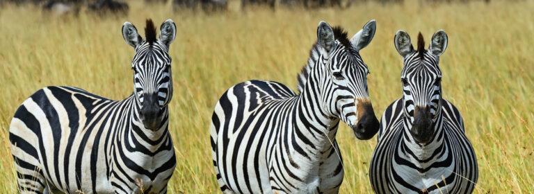 3 Days, 2 Nights Maasai Mara - African Adventure Specialists
