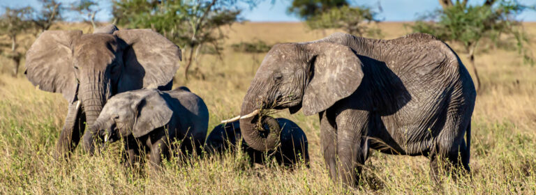 5 Days Kidepo Wilderness Uganda Safari 2021 - African Adventure Specialists