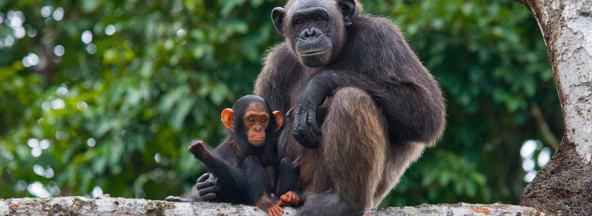 6 Days Queen Elizabeth & Bwindi Safari 2021 - African Adventure Specialists