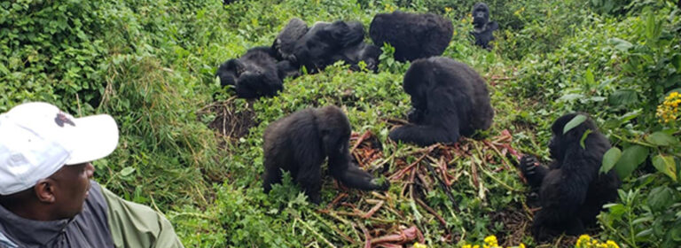 7 DAYS RWANDA PRIMATE EXPERIENCE - African Adventure Specialists