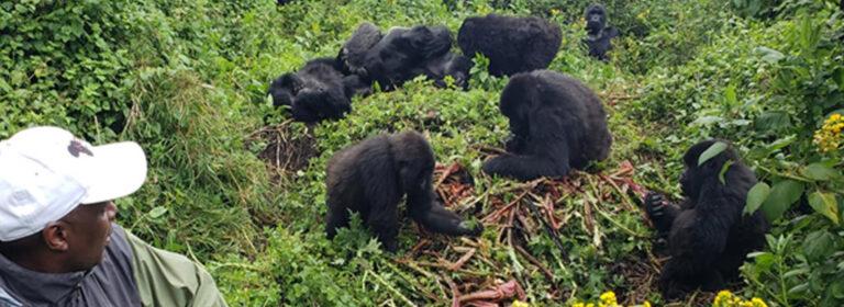 7 DAYS RWANDA PRIMATE EXPERIENCE - African Adventure Specialists