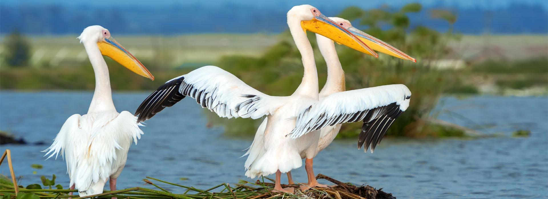 Birding at Semuliki National Park - Top Destinations African Adventure Specialists