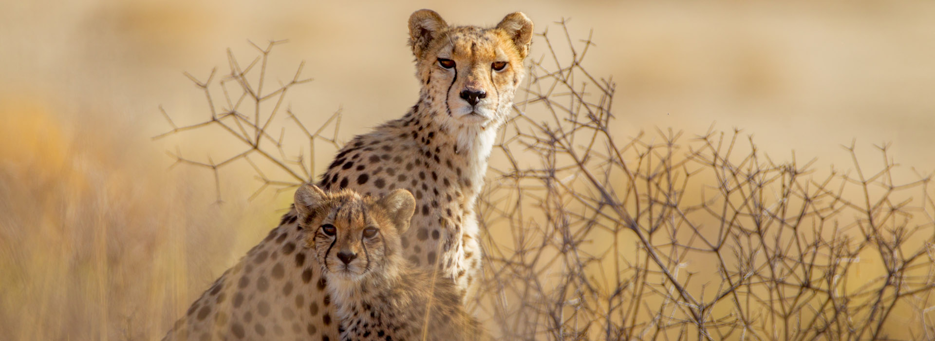 Out of Africa Kenya Safari - African Adventure Specialists