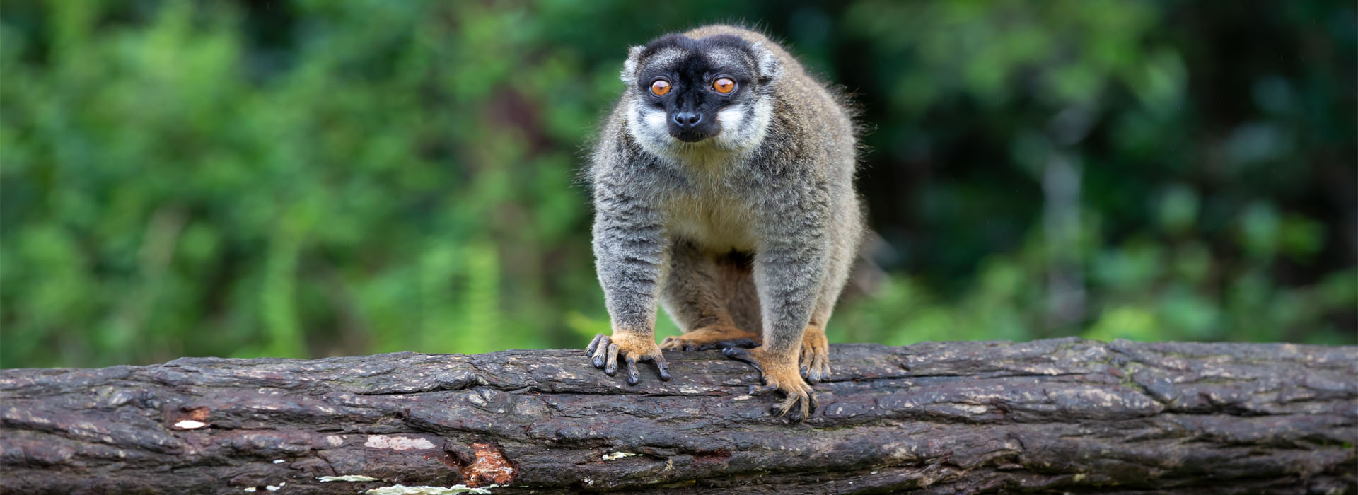 Isalo National Park - Top Travel Destinations in Madagascar - Africa Adventure Specialists