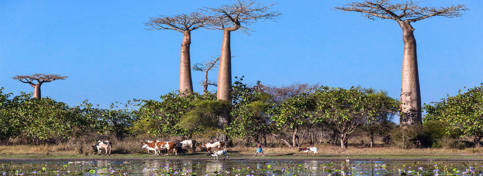 Morondava - Top Travel Destinations in Madagascar - Africa Adventure Specialists