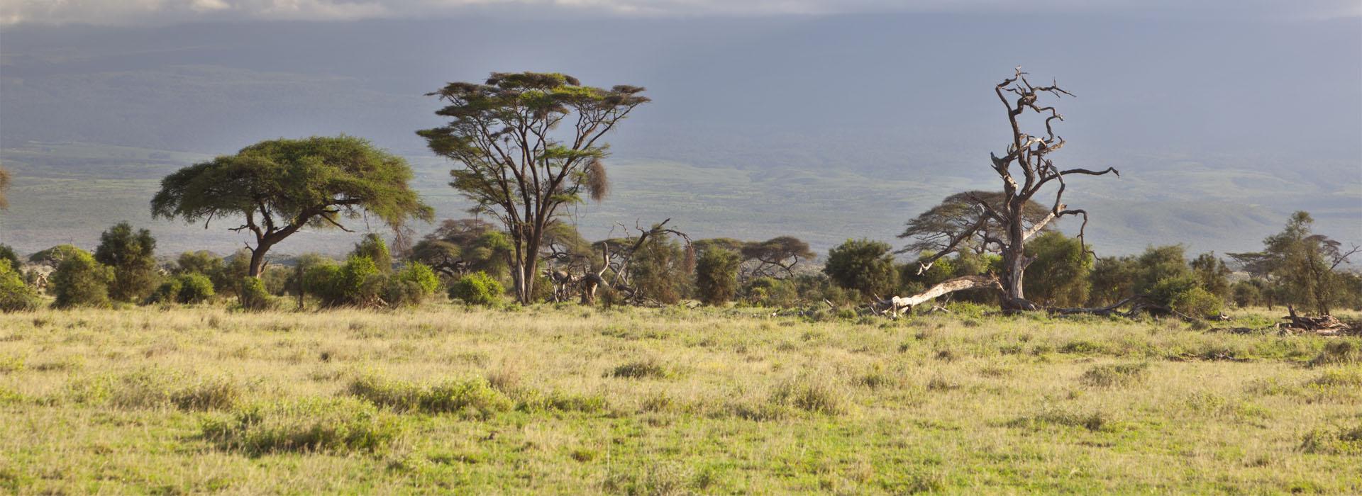 Mt. Kilimanjaro Trekking- The Roof Of Africa - African Adventure Specialists