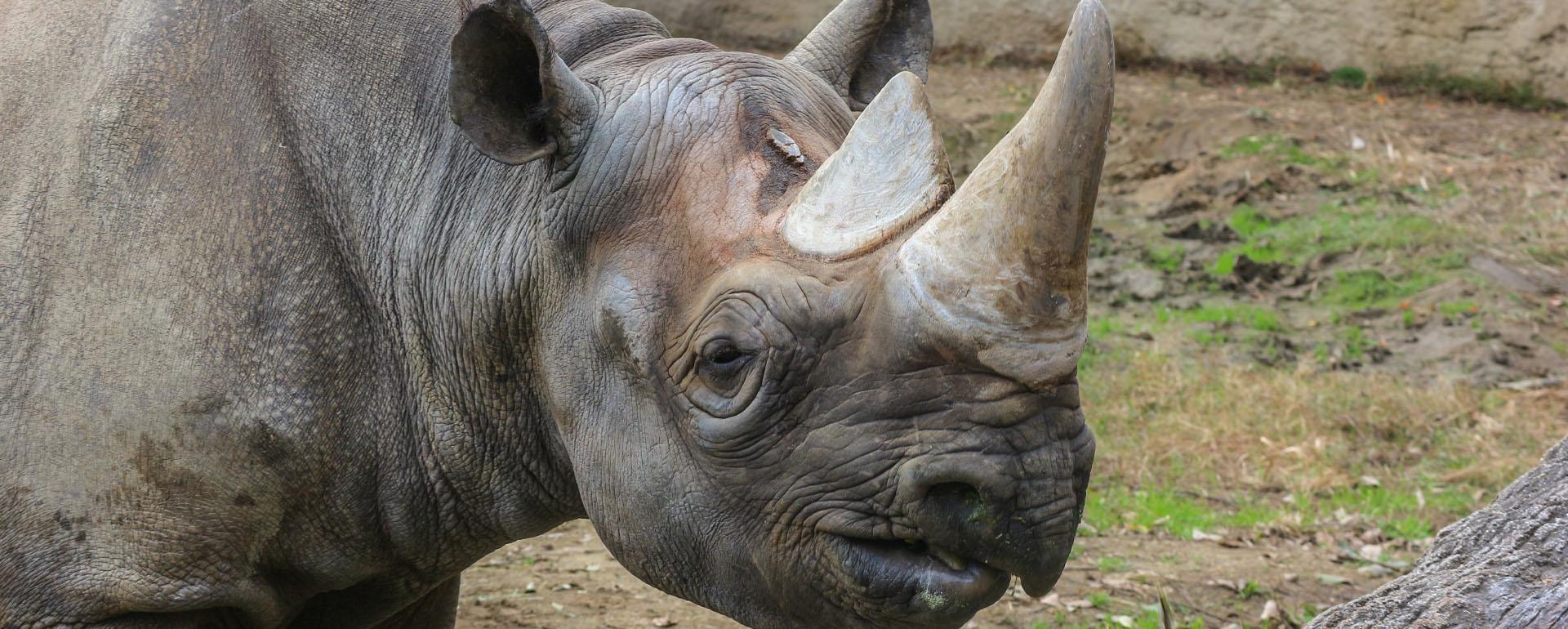 Rhino Watch - African Adventure Specialists