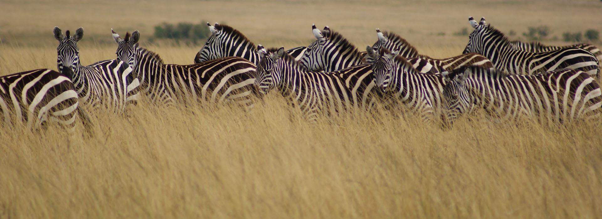 African Adventure Specialists - Arusha National Park Destination