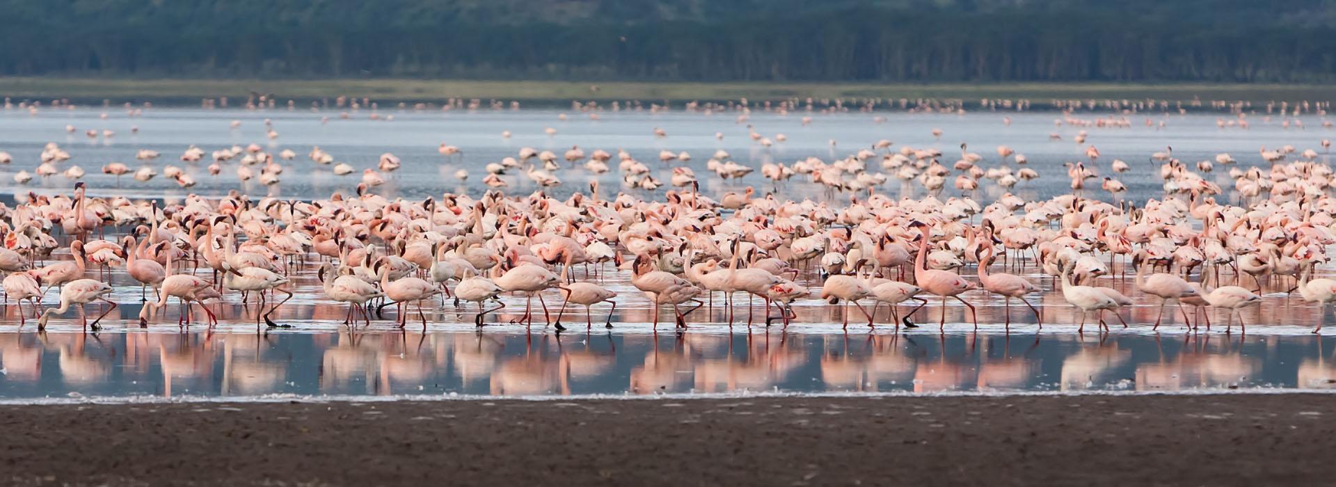 African Adventure Specialists - Lake Bogoria NATIONAL PARK Destination