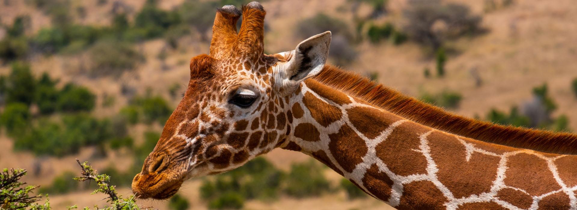 African Adventure Specialists - Samburu National Park Destination