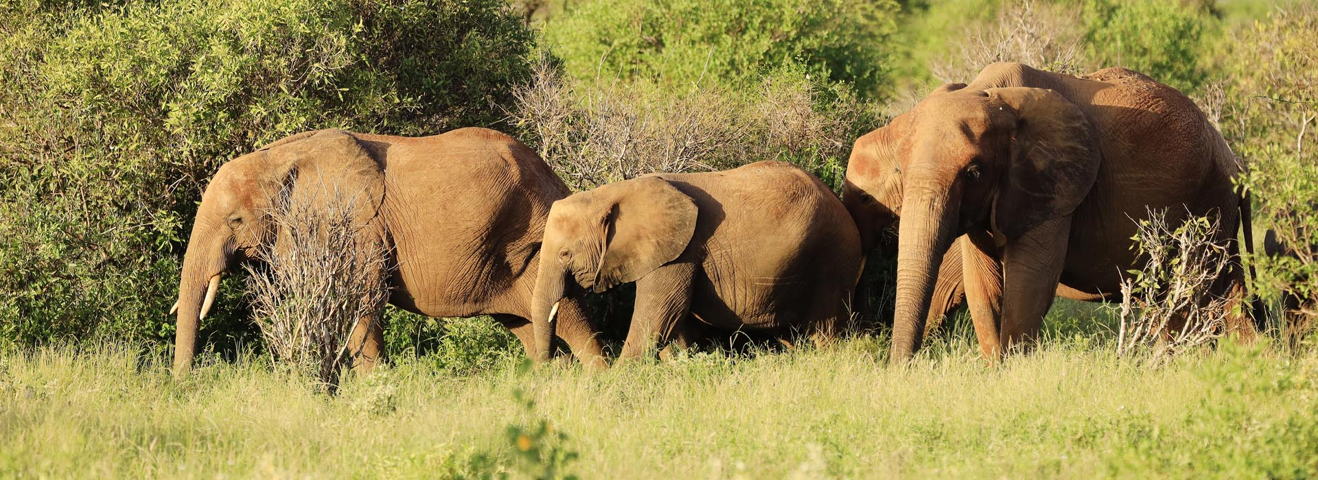 African Adventure Specialists - Tsavo East National Park Destination