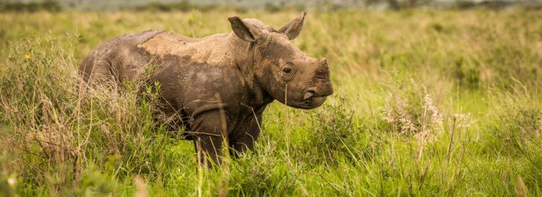 Lewa & Maasai Mara Premium Safari - African Adventures
