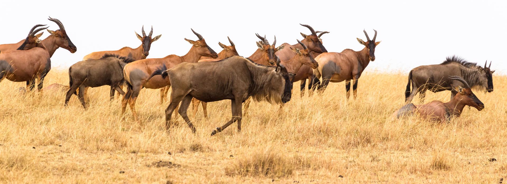 Migration Safaris - African Adventure Safaris