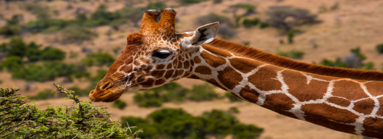 Samburu Travel Destination - African Adventure Safaris