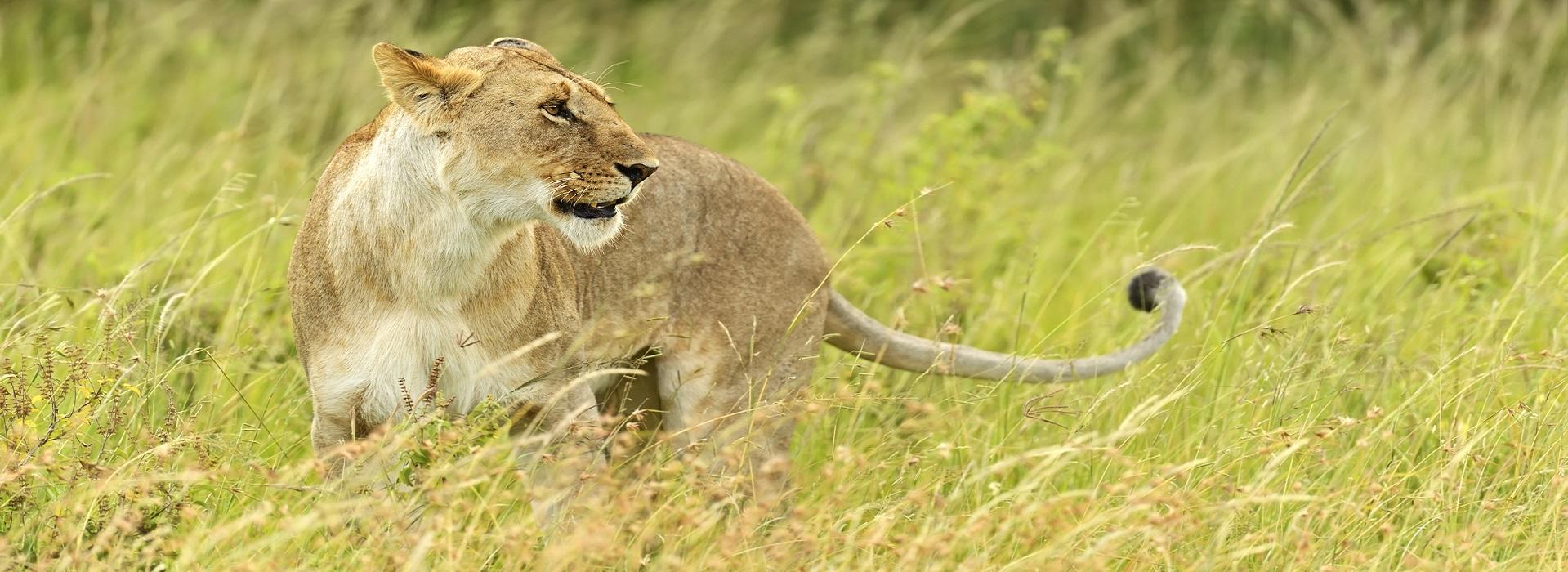 The Ultimate Safari - African Adventure Safaris